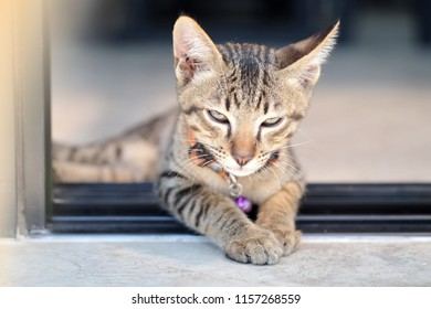 Close-up of Kitten (Tabby cat) laying and looking in camera. Selective focus. The concept of pets.