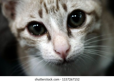 Close-up of Kitten (Tabby cat) looking in camera. Selective focus. The concept of pets.