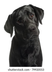 Close-up of Labrador Retriever, 10 months old, in front of white background