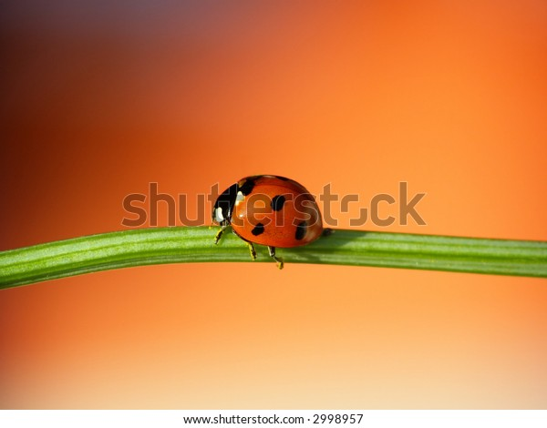 Close-up of ladybug on leaf on red blurred background