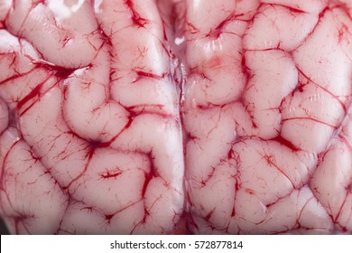Closeup from a lamb brain showing its texture with blood