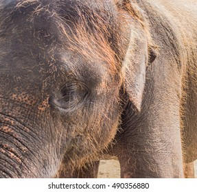 closeup of large gray elephant posing for the camera