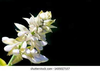 Closeup of late spring budding flowers