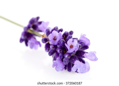 Closeup of lavender flower over white background