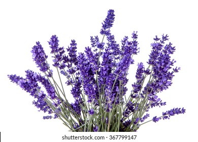 Closeup of lavender flowers over white background