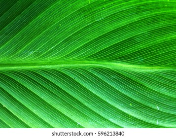 Close-up leaves