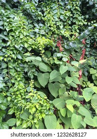 Closeup of leaves and vines
