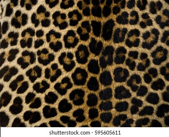 Closeup of a leopard skin