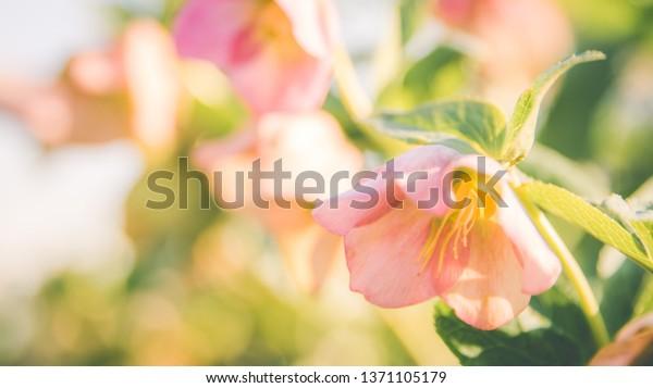 A little peek at my Shutterstock portfolio - image 4 - student project