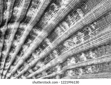 Closeup of the lines and texture of a seashell