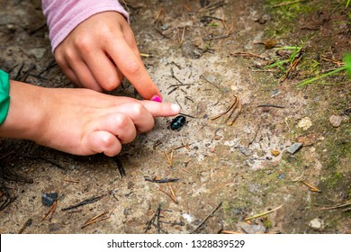 Closeup of little children boy and girl hands at forest ground, exploring and learning about nature and insects. Pointing and touching a black bug.