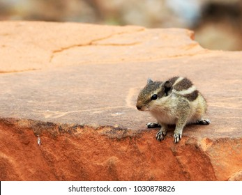 Closeup of a little cute squirrel sitting on an old red brick wall with blurry background