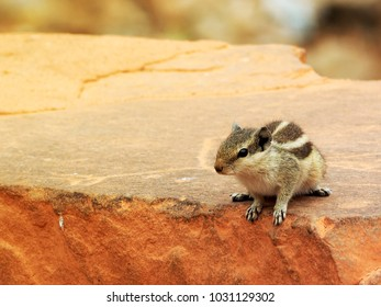 Closeup of a little cute squirrel sitting on an old red brick wall with blurry background with flare light