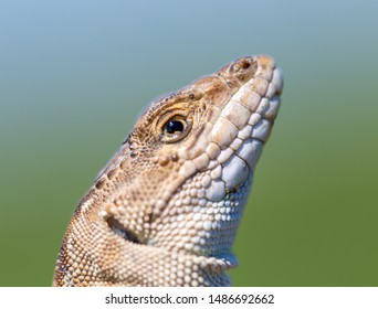 close-up lizard head on human hand.