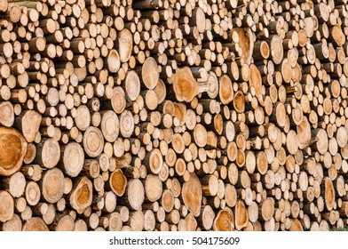 Closeup of logs of trees in nature. a lot of cutted logs.