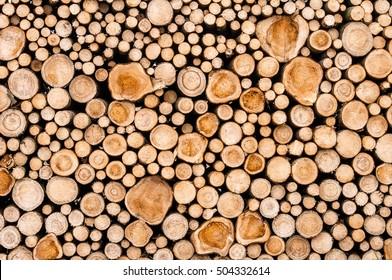 Nahaufnahme von Baumstämmen in der Natur. viele geschnittene Stämme.