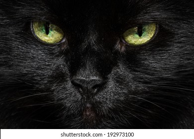 closeup of a long haired black cats face with glowing yellow green eyes