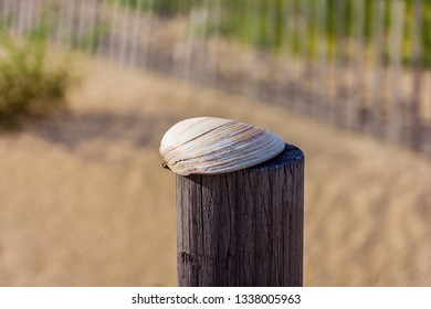 A close-up look at a clam shell on wooden post on the beach.