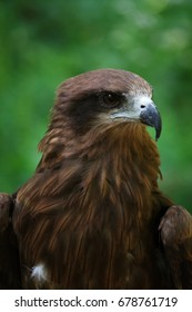 a close-up look of hawk staring on the right side