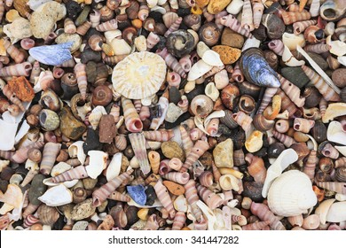 Close-up of lots of tiny shells on a beach. UK, Britain, Europe.