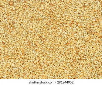 Closeup of lots of toasted sesame seeds.