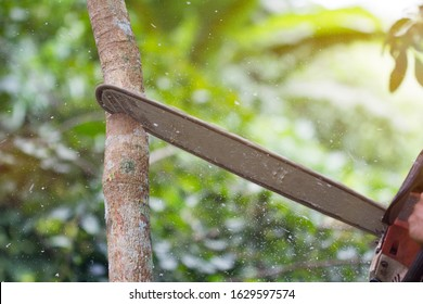 Close-up of lumberjack worker with a chainsaw in his hands saws fallen tree, Professional chainsaw cutting wood, Man cutting wood with saw, dust, and movements, Concept is to bring down trees