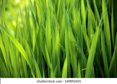 close-up of lush green grass in summer