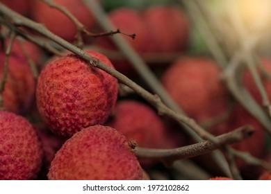 Closeup Lychee fruit (Litchi chinensis Sonn), Thai fruit Linchee  background. - Shutterstock ID 1972102862