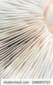Closeup macro image if the gills underneath a white mushroom cap in a wave like form