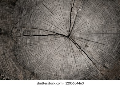 Closeup macro view of end cut wood tree section with cracks and annual rings. Natural organic texture with cracked and rough surface. Flat wooden surface with annual rings.