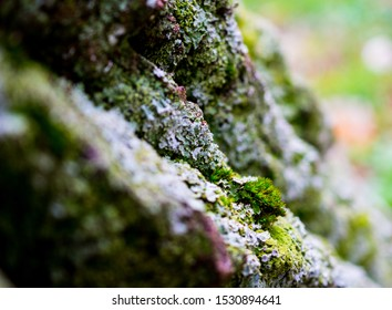 Closeup makro picture of green moss structures on a textured tree bark with low depth of field and blurry background and foreground. Green and grey natural structures on the tree.