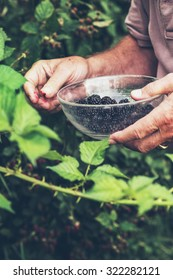 Close-up of male hand holding glass bowl picking blackberries.