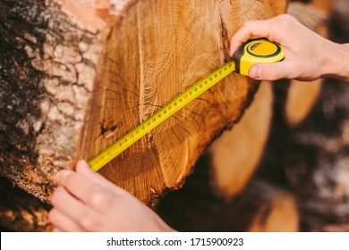 Closeup of man carpenter checking size of tree log with measure tape at sawmill factory. Male woodcutter or forester using measure tape for measuring chopped tree trunk at wood production warehouse