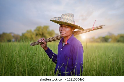 Closeup of a man fishing in the rice field.Rice in the green rice field is a way of life and culture of Thai farmers.