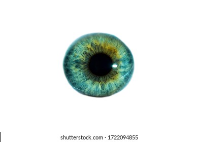 Close-up of a man's eye with a beautiful green color. Isolated on a white background.