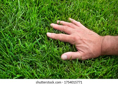 Closeup man's hand inspecting green grass lawn, healthy tall fescue, water, watering, damaged grass, new over seed grass, fertilizer application, thick grass, caring for your lawn, no weeds, weeding - Shutterstock ID 1754015771