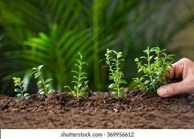 Closeup of man's hand planting tree on ground