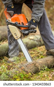 Closeup of a man's hands sawing a big trunk in the forest