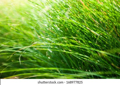 Close-up of many green grass blades as a background