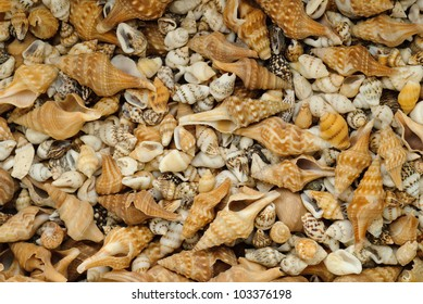 Close-up of many small seashells