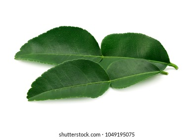 closeup and marco of bergamot leaf isolated on a white background. tropical herb for medicine.