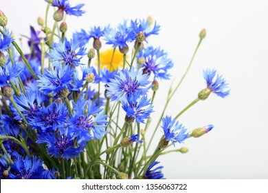 Close-up meadow blue cornflowers on white background