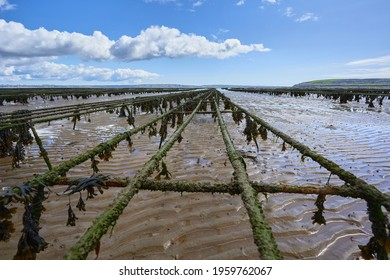 closeup of metal structure for oyster beds. aquaculture in Waterford Ireland.