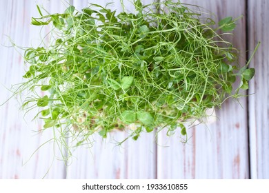 A close-up of microgreens of peas on a gray background. Planting microgreen peas. Germinating seeds at home. Sprouted seeds, microgreens. Vegan and healthy food concept.