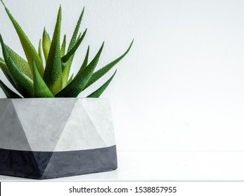 Close-up modern geometric concrete planter with green succulent plant on white shelf isolated on white background with copy space. Beautiful painted concrete pot.