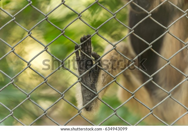 Close-up monkey's foot in cage