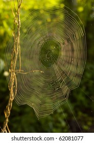 Closeup of morning dew on a spiderweb