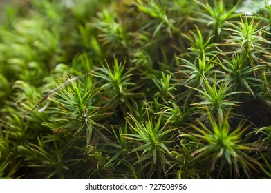 closeup of moss in the forest