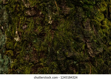 Close-up of moss growing on loaf