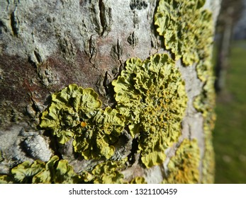 closeup from a moss plant on a tree bark